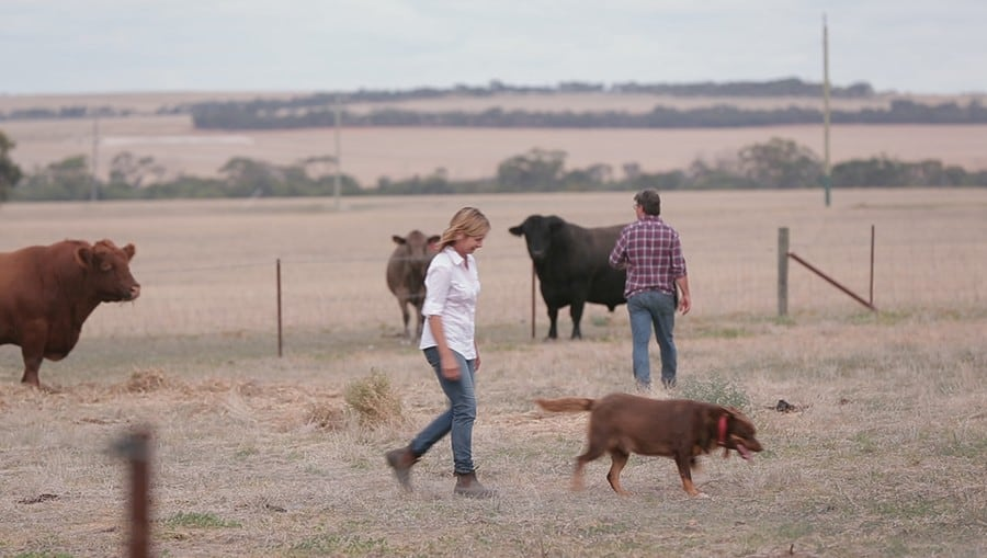 Cattle Farmer Video